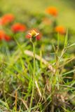 一朵蓟野花的特写镜头照片在领域的 免版税库存照片