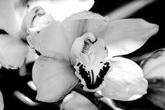 一朵被隔绝的兰花在庭院里 库存照片