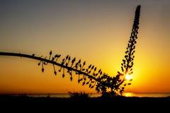 一朵野花的剪影 库存照片