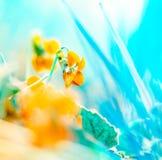 一朵野花的抽象宏观照片在一个春天早晨 免版税库存照片