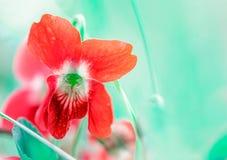 一朵野花的抽象宏观照片在一个春天早晨 图库摄影