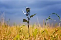 一朵金属花的抽象在生存自然中的 库存图片