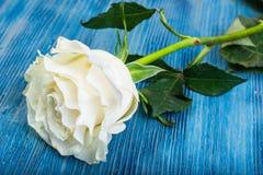 一朵陈旧的白色玫瑰 图库摄影