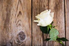 一朵陈旧的白色玫瑰 免版税图库摄影