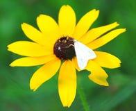 一朵雏菊每天 免版税库存照片