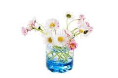 一朵雏菊的花在玻璃的 图库摄影