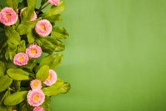 一朵雏菊的顶视图在绿色背景的 免版税库存照片