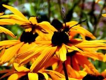 一朵霓虹花的例证与蝴蝶的 库存图片