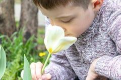 一朵青春期前的白种人男孩嗅到的白色郁金香花在春天庭院 库存照片