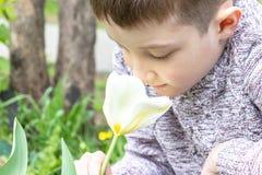 一朵青春期前的白种人男孩嗅到的白色郁金香花在春天庭院 免版税库存图片
