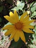 一朵非常美丽的花不整洁的花 库存照片