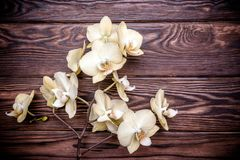一朵黄色兰花的分支 免版税库存照片