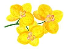 一朵黄色兰花的花 额嘴装饰飞行例证图象其纸部分燕子水彩 免版税库存照片