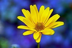一朵黄色花的美丽的芽在词根的 图库摄影