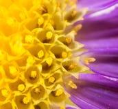 一朵黄色花的背景 关闭 库存图片