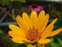 一朵黄色花 库存照片