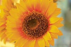一朵晴朗的花 免版税库存图片