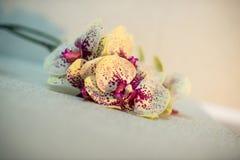 一朵黄色兰花的分支在轻的背景的 图库摄影