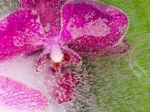 一朵紫色兰花的抽象 库存照片