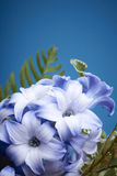 一朵紫色和白色风信花花 免版税图库摄影