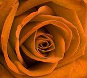 一朵黄色玫瑰的宏指令 免版税库存图片