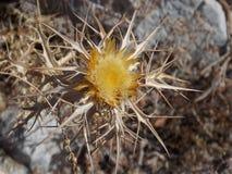 一朵黄色花在秋天 免版税图库摄影