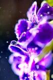 一朵紫色花的抽象图象与迷离和bokeh的 免版税库存图片