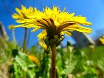 一朵黄色花的特写镜头 免版税库存图片