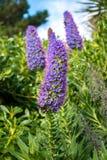 一朵紫色花的看法与蜂的 库存照片