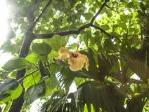 一朵黄色花以绿色在它附近离开 库存照片
