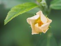 一朵黄色花 免版税库存图片