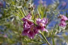 一朵紫色花 免版税库存图片