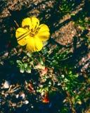一朵黄色花 库存图片