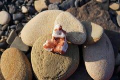一束不同的形状小卵石在海滨的 与棕色利益的一块白色珊瑚石头 库存照片