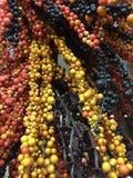 一束五颜六色的人为莓果背景 免版税库存图片