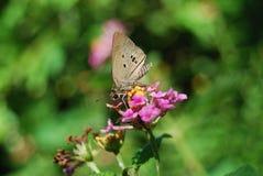 一束五颜六色的花和蝴蝶 免版税库存照片
