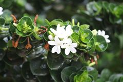 一束呈绿色和白花 图库摄影
