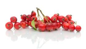 一束在一个空白背景的红色苹果 免版税库存照片