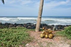 一束在地面上的椰子 免版税库存图片