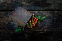 一束在老黑暗的木地板上的新鲜的红色蕃茄 图库摄影