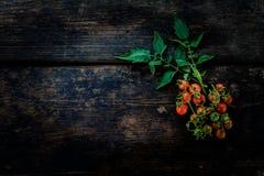 一束在老黑暗的木地板上的新鲜的红色蕃茄 免版税图库摄影