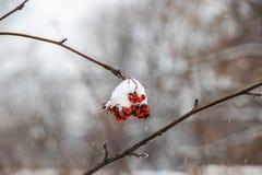 一束在雪下的山脉灰 免版税库存图片