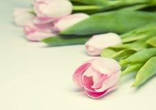 桃红色tulipes 免版税库存图片