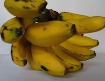 一束热带香蕉果子 免版税库存图片