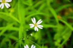 一束白花在森林里开了花 图库摄影