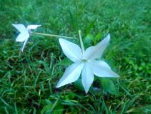 一束白花的前景 库存照片