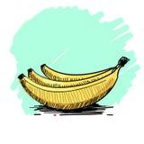 一束的传染媒介例证香蕉 免版税库存照片