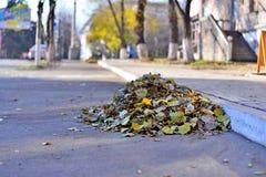 一束秋叶清扫了擦净剂对柏油路的边缘到边路,一个乏味雨天,在背景中 免版税库存图片