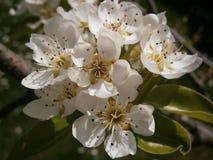 一束美丽的白花 免版税库存照片