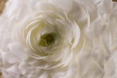 一束美好的白花绽放 免版税库存图片